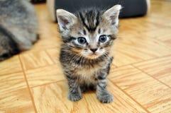 Ένα χαριτωμένο μικρό κοίταγμα γατακιών Στοκ εικόνες με δικαίωμα ελεύθερης χρήσης