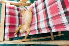 Ένα χαριτωμένο μικρό παιχνίδι γατακιών γατών/γατακιών μωρών στο δίπλωμα των κρεβατιών Στοκ Εικόνα
