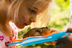 Ένα χαριτωμένο νέο κορίτσι που εξετάζει στενό το φρύνο (βάτραχος) Στοκ Εικόνες