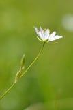 Ένα χαριτωμένο λουλούδι Στοκ Φωτογραφία