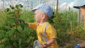 Ένα χαριτωμένο παιδί με τη μητέρα του που τρώει τα σμέουρα δεξιά από το θάμνο Το αγόρι σχίζει ήπια το μούρο και το υποβάλλει δικο φιλμ μικρού μήκους