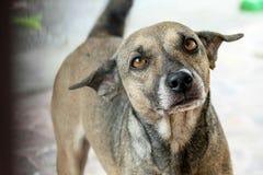 Ένα χαριτωμένο περιπλανώμενο σκυλί Στοκ Φωτογραφίες