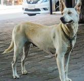 Ένα χαριτωμένο περιπλανώμενο σκυλί στοκ φωτογραφία