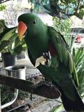 Ένα χαριτωμένο πουλί Psittacines ή παπαγάλων Στοκ φωτογραφία με δικαίωμα ελεύθερης χρήσης