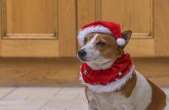 Ένα χαριτωμένο σκυλί σε ένα κόκκινο καπέλο Santa Στοκ εικόνα με δικαίωμα ελεύθερης χρήσης