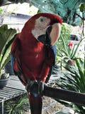Ένα χαριτωμένο Macaws Στοκ Εικόνες