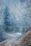 Ένα χειμερινό δάσος Στοκ Φωτογραφία