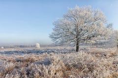 Ένα χειμερινό τοπίο στη μέση των Κάτω Χωρών Στοκ Φωτογραφία