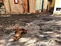 Ένα χνουδωτό σκυλί που έχει τη σιέστα στη σκιά στοκ εικόνα