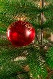 Ένα χριστουγεννιάτικο δέντρο που διακοσμείται με μια κόκκινη σφαίρα γυαλιού Μια διαφανής νέα σφαίρα έτους ` s όμορφα Χριστούγεννα Στοκ Εικόνα