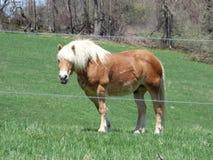Ένα χρυσό άλογο σχεδίων Στοκ εικόνα με δικαίωμα ελεύθερης χρήσης