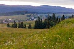 Ένα χωριό κοντά σε έναν μεγάλο μεγάλο τομέα με τα χορτάρια και ένα λωρίδα του έλατου στο υπόβαθρο των βουνών Στοκ Εικόνες