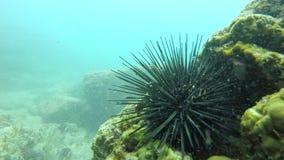 Ένα ψάρι που κολυμπά σε μια θάλασσα φιλμ μικρού μήκους