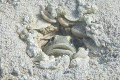 Ένα ψάρι που κρύβει στη φωλιά του Στοκ εικόνα με δικαίωμα ελεύθερης χρήσης