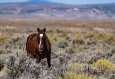Ένα όμορφο άγριο άλογο στο Κολοράντο στοκ εικόνα