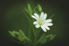 Ένα όμορφο άγριο λουλούδι στοκ φωτογραφία