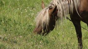 Ένα όμορφο άλογο βόσκει σε ένα λιβάδι φωτεινή ημέρα ηλιόλουστη απόθεμα βίντεο
