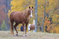 Ένα όμορφο άλογο στον όρμο Cades στο καπνώές εθνικό πάρκο βουνών Στοκ Εικόνες