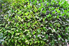 Ένα όμορφο δέντρο με τα διαφορετικά πράσινα χρώματα Στοκ φωτογραφίες με δικαίωμα ελεύθερης χρήσης