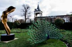 Ένα όμορφο αρσενικό peacock που παρουσιάζει ρόδα του Στοκ φωτογραφία με δικαίωμα ελεύθερης χρήσης
