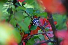 Ένα όμορφο δέντρο άνθισε στον κήπο, άνοιξη στοκ φωτογραφίες με δικαίωμα ελεύθερης χρήσης