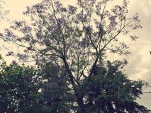 Ένα όμορφο δέντρο σε μια ήρεμη πόλη την άνοιξη στοκ εικόνα με δικαίωμα ελεύθερης χρήσης