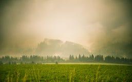 Ένα όμορφο, ζωηρόχρωμο, αφηρημένο τοπίο βουνών με μια καυτή θερινή ελαφριά ομίχλη στη θερμή πράσινη τονικότητα Στοκ Εικόνες