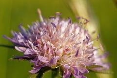 Ένα όμορφο και αρκετά μακρο λουλούδι Στοκ φωτογραφία με δικαίωμα ελεύθερης χρήσης