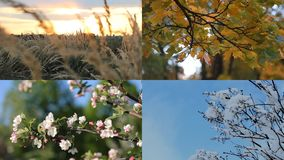Ένα όμορφο κολάζ - φθινόπωρο, χειμώνας, άνοιξη, καλοκαίρι - τέσσερις εποχές απόθεμα βίντεο