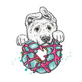 Ένα όμορφο κουτάβι και ζωηρόχρωμο doughnut επίσης corel σύρετε το διάνυσμα απεικόνισης Ένα γενεαλογικό σκυλί και ένα γλυκό επιδόρ Στοκ Εικόνα