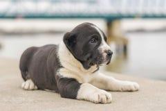 Ένα όμορφο μικρό σκυλί θέτει έξω στοκ εικόνες με δικαίωμα ελεύθερης χρήσης