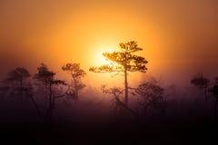 Ένα όμορφο, ονειροπόλο τοπίο πρωινού του ήλιου που αυξάνεται επάνω από ένα misty έλος Ζωηρόχρωμο, καλλιτεχνικό βλέμμα Στοκ Φωτογραφία