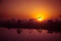 Ένα όμορφο, ονειροπόλο τοπίο πρωινού του ήλιου που αυξάνεται επάνω από ένα misty έλος Ζωηρόχρωμο, καλλιτεχνικό βλέμμα Στοκ φωτογραφίες με δικαίωμα ελεύθερης χρήσης