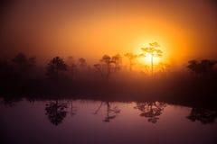 Ένα όμορφο, ονειροπόλο τοπίο πρωινού του ήλιου που αυξάνεται επάνω από ένα misty έλος Ζωηρόχρωμο, καλλιτεχνικό βλέμμα Στοκ εικόνα με δικαίωμα ελεύθερης χρήσης
