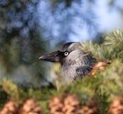 Ένα όμορφο πορτρέτο ενός πουλιού στοκ εικόνα με δικαίωμα ελεύθερης χρήσης