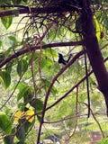 Ένα όμορφο πουλί είναι στο δέντρο Στοκ Εικόνες