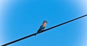 Ένα όμορφο πουλί Στοκ εικόνες με δικαίωμα ελεύθερης χρήσης