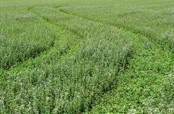 Ένα όμορφο πράσινο λιβάδι ως υπόβαθρο στοκ φωτογραφίες με δικαίωμα ελεύθερης χρήσης