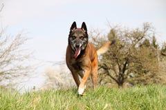 Ένα όμορφο σκυλάκι στο πορτρέτο Στοκ Εικόνες