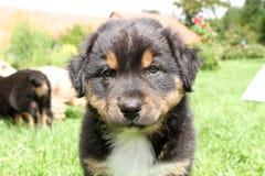 Ένα όμορφο σκυλάκι υπαίθριο Στοκ φωτογραφία με δικαίωμα ελεύθερης χρήσης