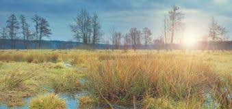 Ένα όμορφο τοπίο της άγριας φύσης στην αυγή την πρώιμη άνοιξη στοκ εικόνα με δικαίωμα ελεύθερης χρήσης