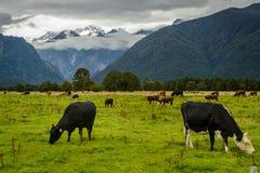 Ένα όμορφο τοπίο της Νέας Ζηλανδίας Στοκ Φωτογραφίες