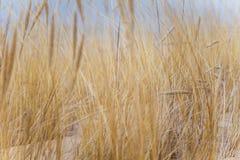 Ένα όμορφο τοπίο των αμμόλοφων στην ακτή της θάλασσας της Βαλτικής Στοκ Εικόνες