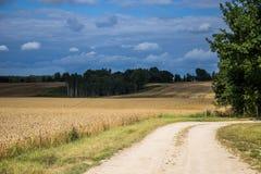 Ένα όμορφο τοπίο χωρών με τους τομείς ενός σίτου που τεντώνουν στην απόσταση Στοκ Εικόνα