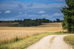 Ένα όμορφο τοπίο χωρών με τους τομείς ενός σίτου που τεντώνουν στην απόσταση Στοκ εικόνες με δικαίωμα ελεύθερης χρήσης
