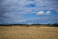 Ένα όμορφο τοπίο χωρών με τους τομείς ενός σίτου που τεντώνουν στην απόσταση Στοκ εικόνα με δικαίωμα ελεύθερης χρήσης