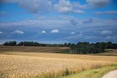 Ένα όμορφο τοπίο χωρών με τους τομείς ενός σίτου που τεντώνουν στην απόσταση Στοκ φωτογραφία με δικαίωμα ελεύθερης χρήσης