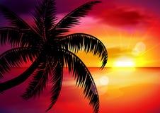 Ένα όμορφο τροπικό τοπίο ηλιοβασιλέματος, ανατολή με το φοίνικα διανυσματική απεικόνιση