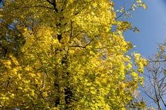 Ένα όμορφο φθινόπωρο στοκ εικόνα