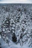 Ένα όμορφο χειμερινό τοπίο στη σκανδιναβική Ευρώπη Στοκ Φωτογραφία